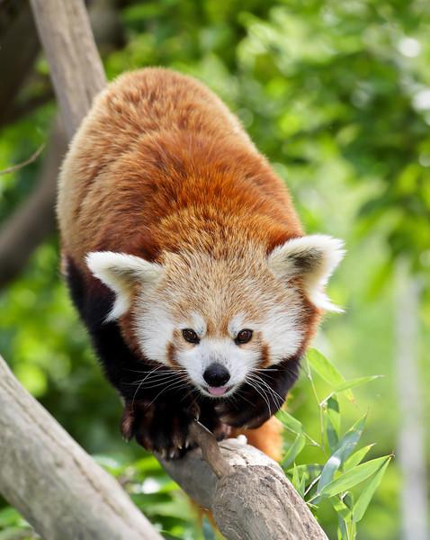 IMAGE: http://hammer418.smugmug.com/Nature/Zoo-2012/i-FV3HhJz/0/L/IMG0150-L.jpg